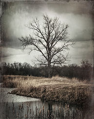 Treewith lake print 8x10.jpg