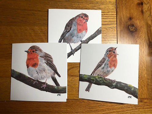 Robin Greeting Cards (6 Pack)
