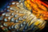 TT Feathers.jpg