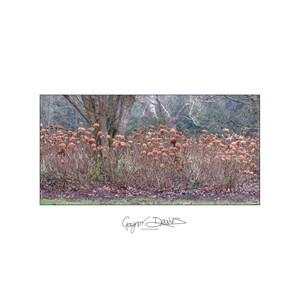 Floral - trees-3.jpg