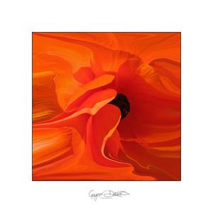 Flowers-19.jpg