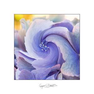 Flowers-05.jpg