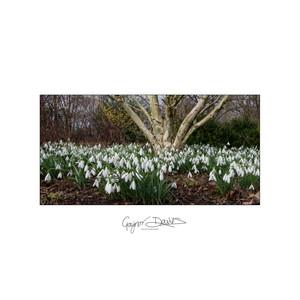 Floral - trees-1.jpg
