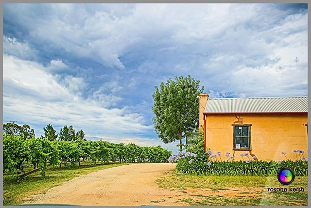 If you're driving through NSW, stop by _groveestate wines and you will find this picturesque setting