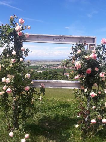 Bellezze del Monferrato