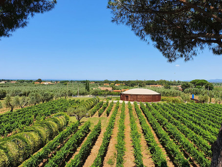 Esprimi un desiderio: Campo alle Comete, tra vino e poesia