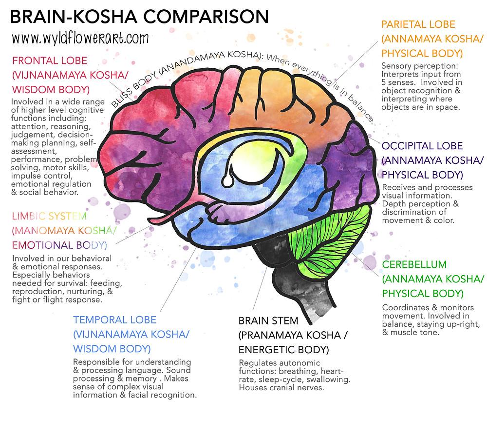 Brain-Kosha Comparison