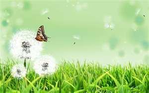 butterfly with dandelion wide.jpg