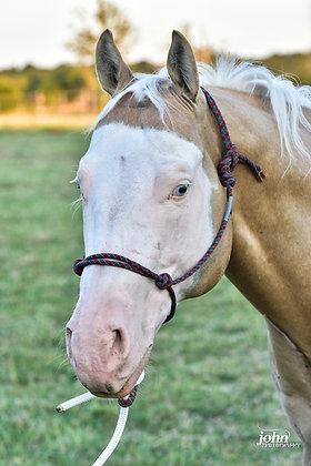 Licol Horse corde 8mm