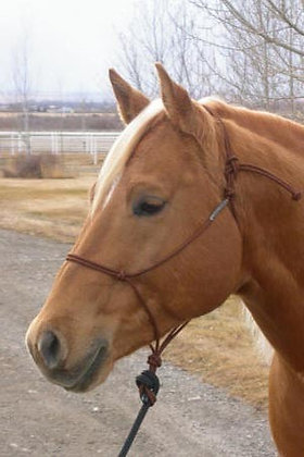 Licol Draft Horse Buck Brannaman 6mm