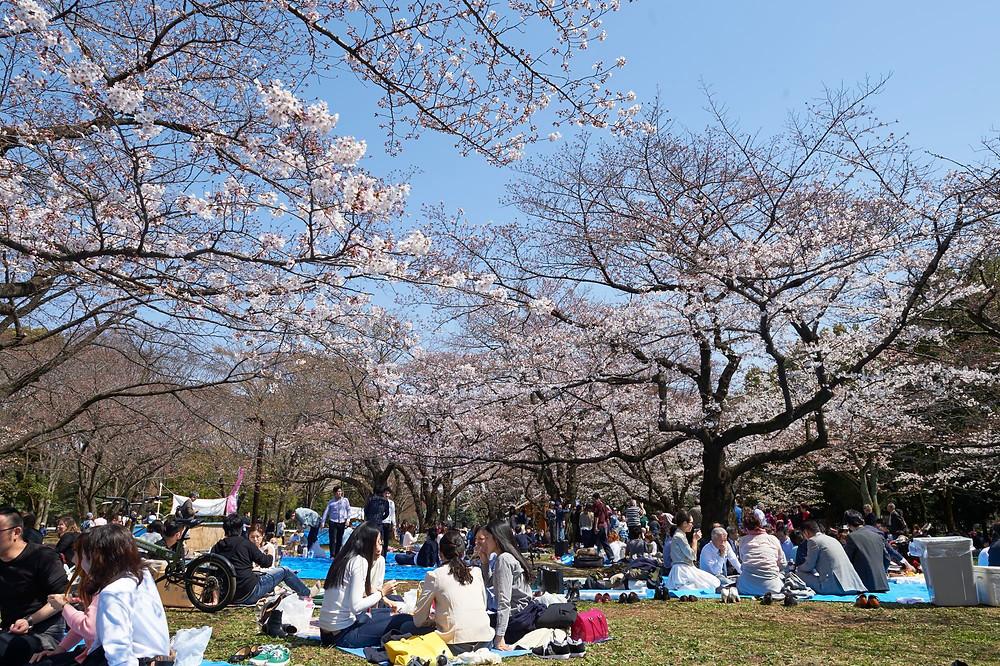 Piquenique no Parque Yoyogi em Tóquio JNTO