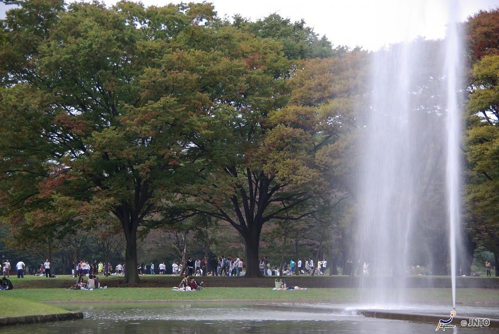 Yoyogi Park no outono