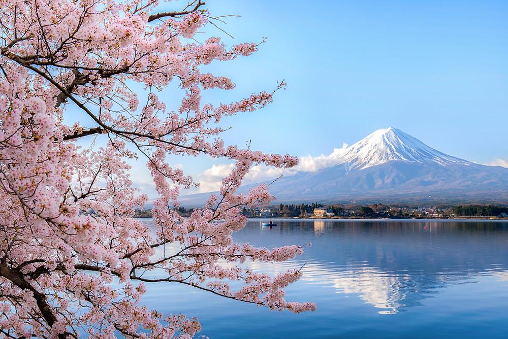 Monte Fuji e sakura