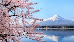8 curiosidades sobre a florada das cerejeiras no Japão