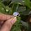 Thumbnail: Natural Moonstone Pear Shape 925 Silver Ring