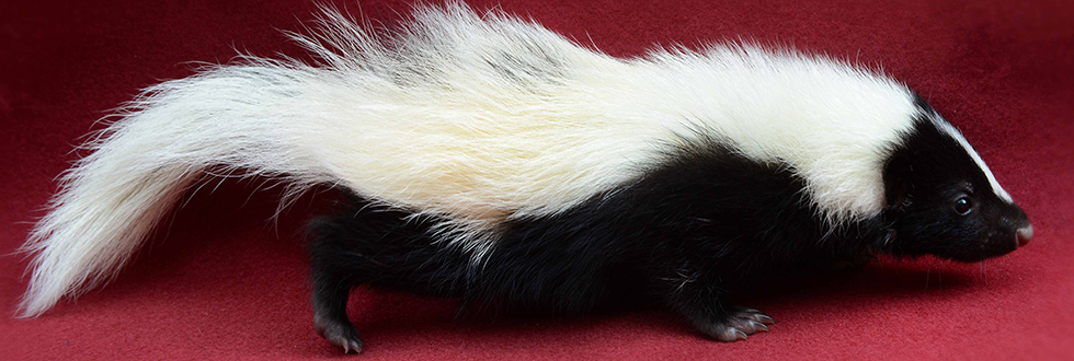Skunk 980 x 330