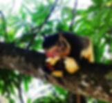 Ayurveda Sri Lanka Essen