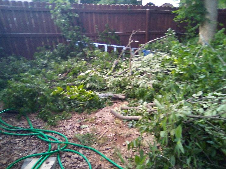 Tree cutting1