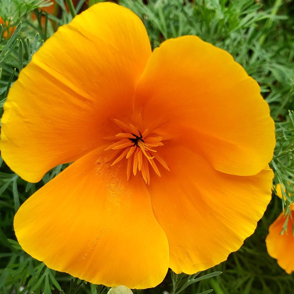 A closeup of a flower