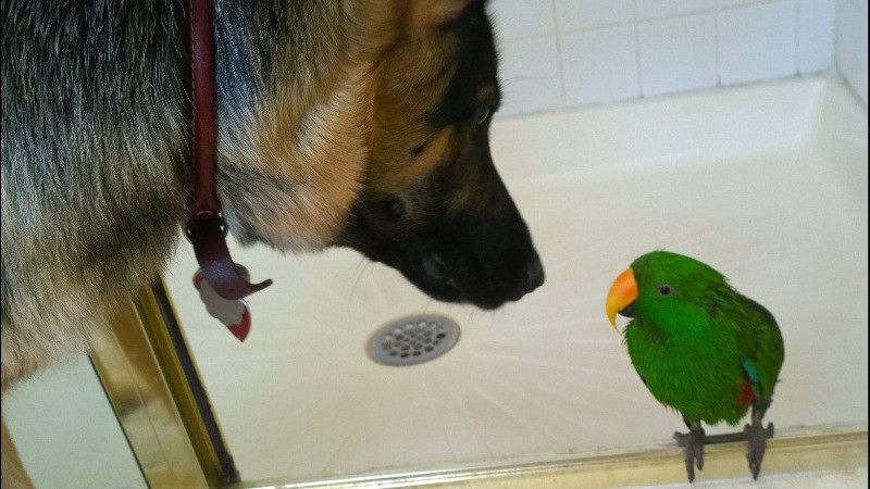 Indi with our parrot