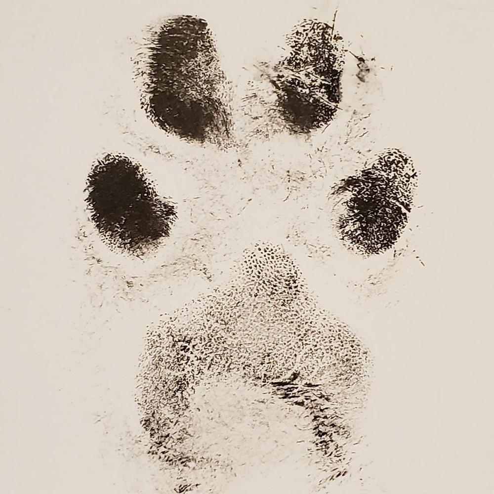 A paw print