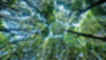 forest-canopy.jpg.838x0_q80.jpg