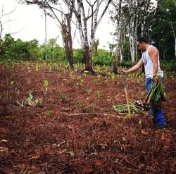 HAKI PLANTING