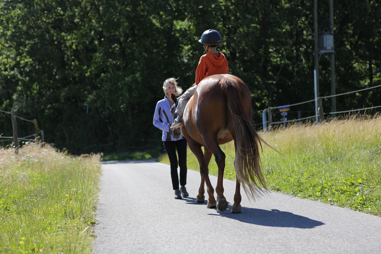 zoothérapeute chien et cheval Genève
