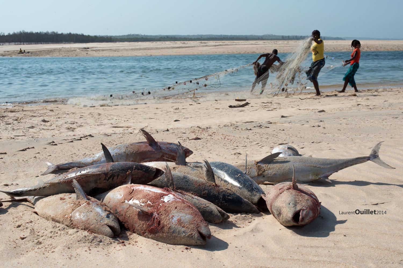 Mozambique 2014