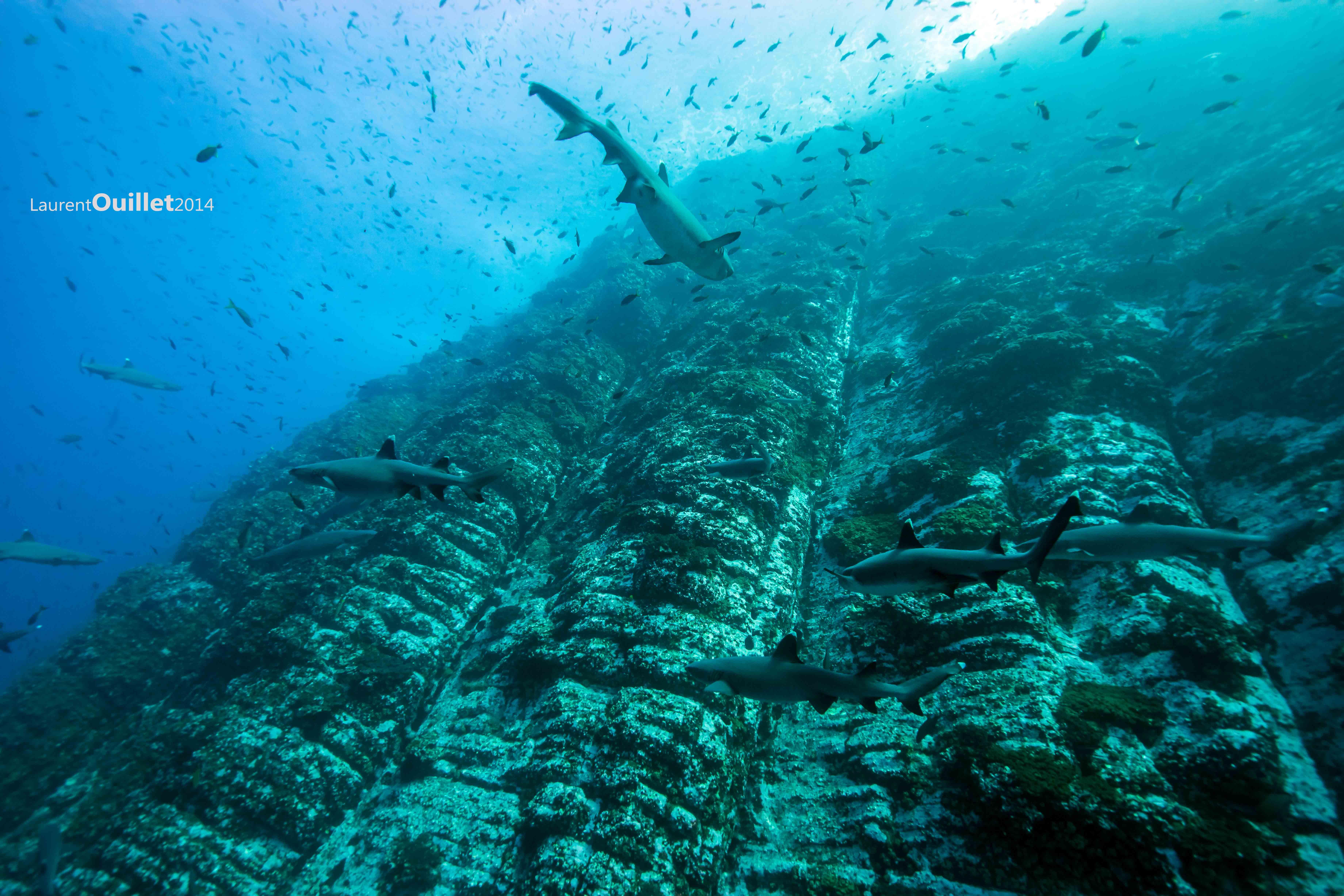 Pacifique Socorro 2014