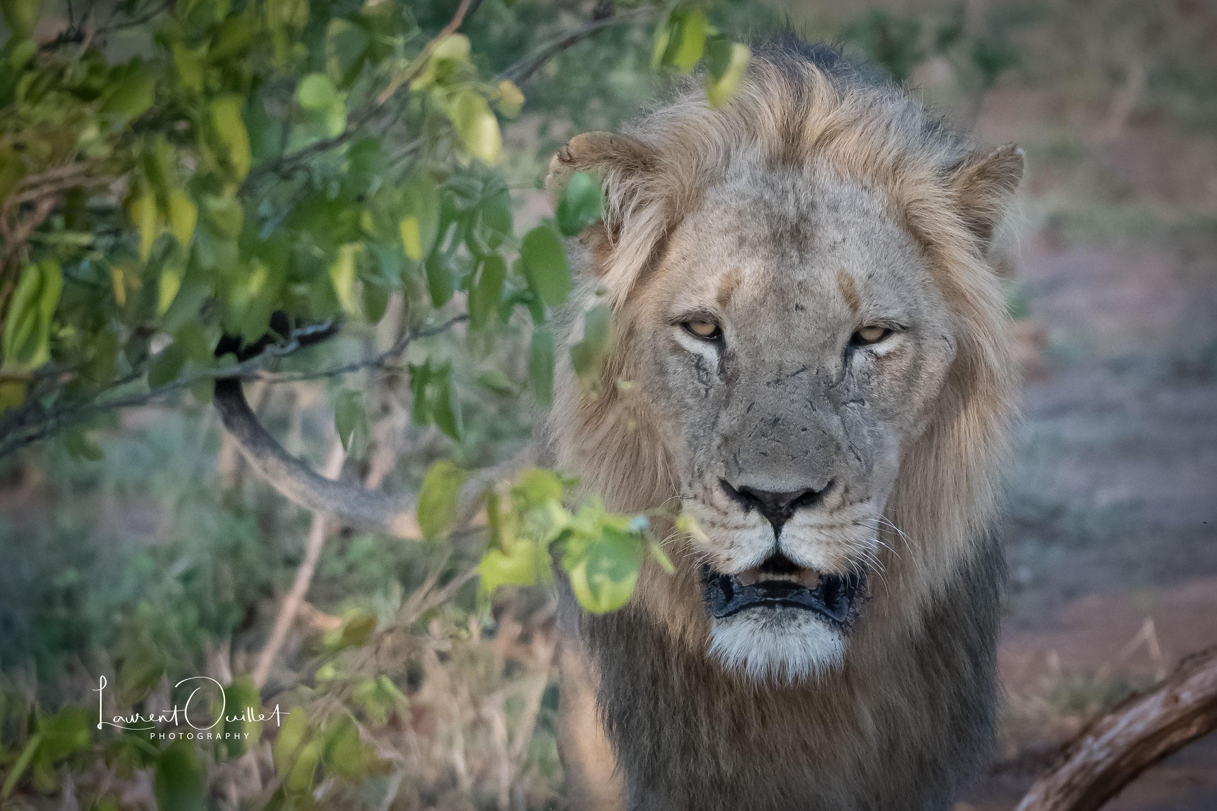 Kruger Nov