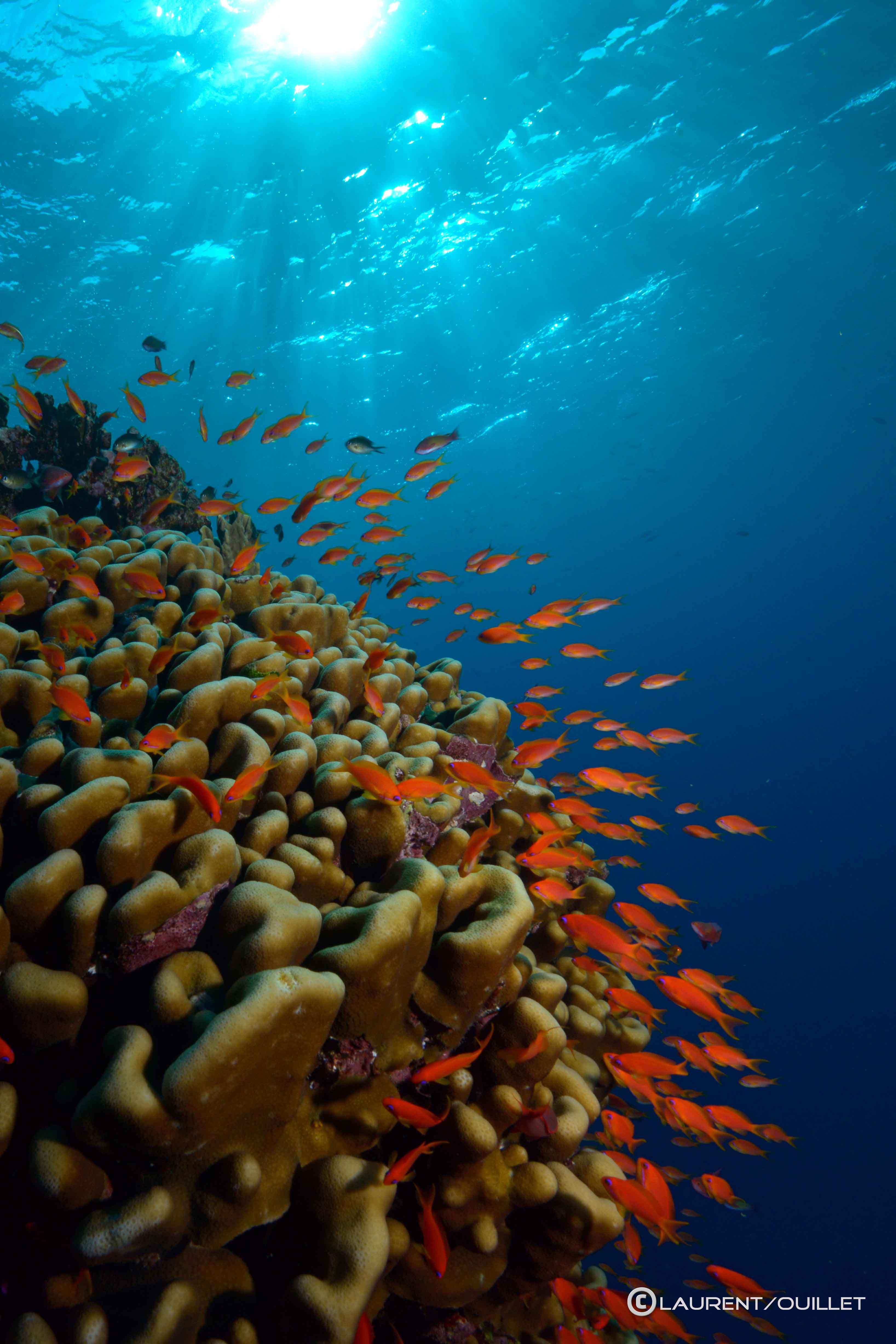 Mer Rouge 1er de l'an 2014