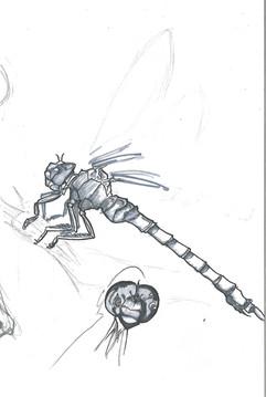 Dragonfly Study