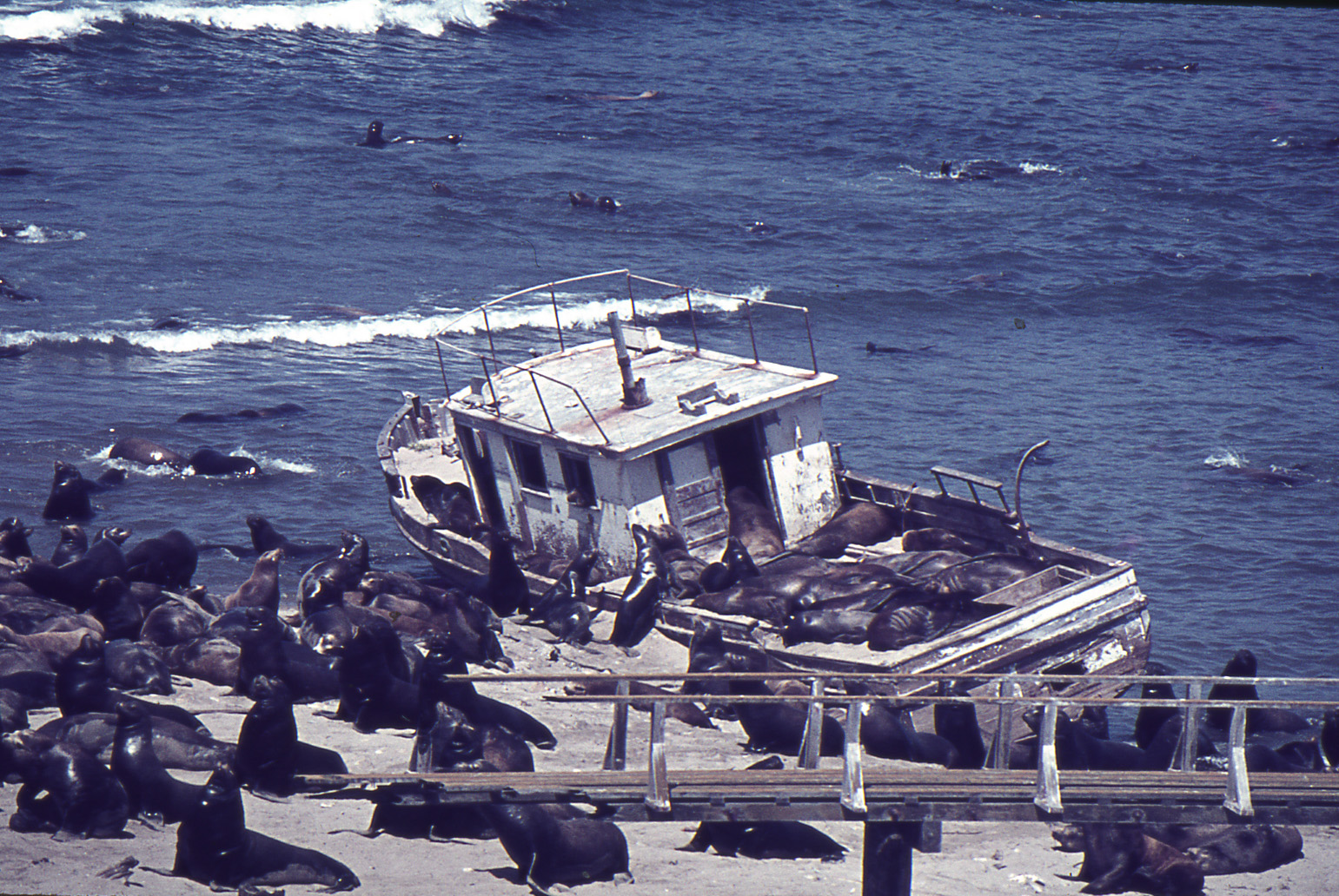 Fishing+for+Sea+Lions.jpg