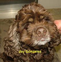 Jay Gonzales.jpg
