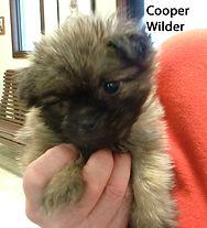 Cooper Wilder.jpg
