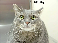Milo May.jpg