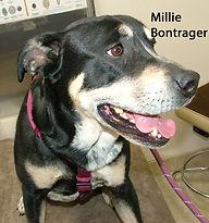 Millie Bontgrager.jpg