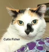 Cutie Fisher.jpg