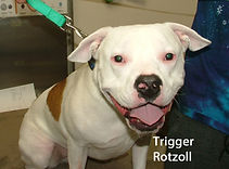Trigger Rotzoll.jpg