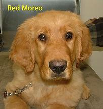 Red Moreo.jpg