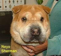 Neyo Sherman.jpg