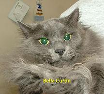 Bella Curtin.jpg