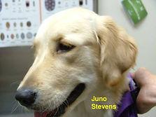 Juno Stevens.jpg