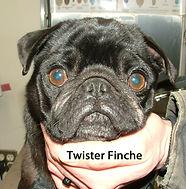 Twister Finch.jpg