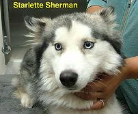 Starlette Sherman.jpg