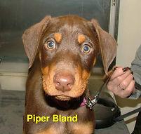 Piper Bland.jpg