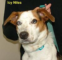 Icy Niles.jpg