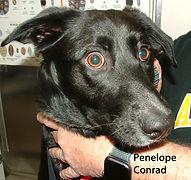 Penelope Conrad.jpg