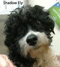 Shadow Ely.jpg